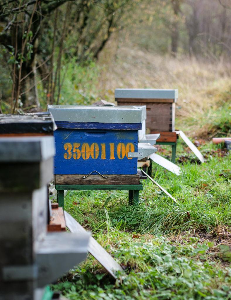 Sans oublier le miel des abeilles d'Abel.
