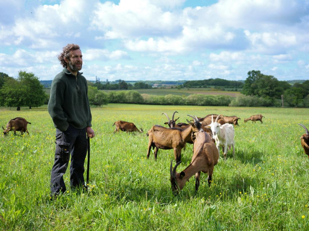 Producteur de lait de chèvre à Guichen